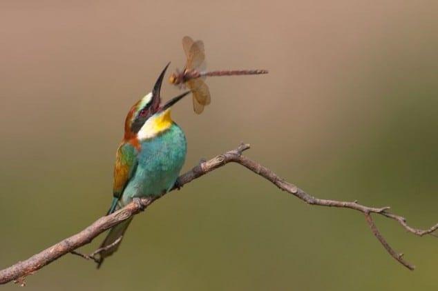 Bird+Feeding.jpgBird+Feeding