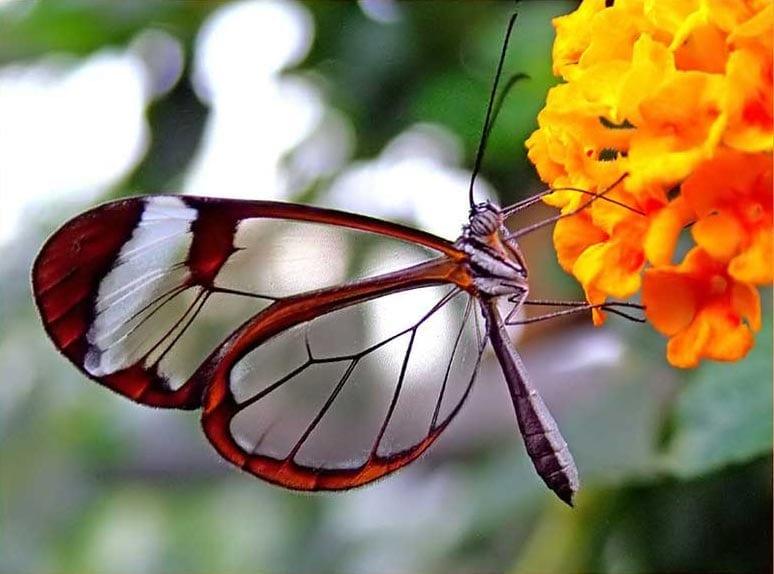 Glass+Butterfly.jpgGlass+Butterfly