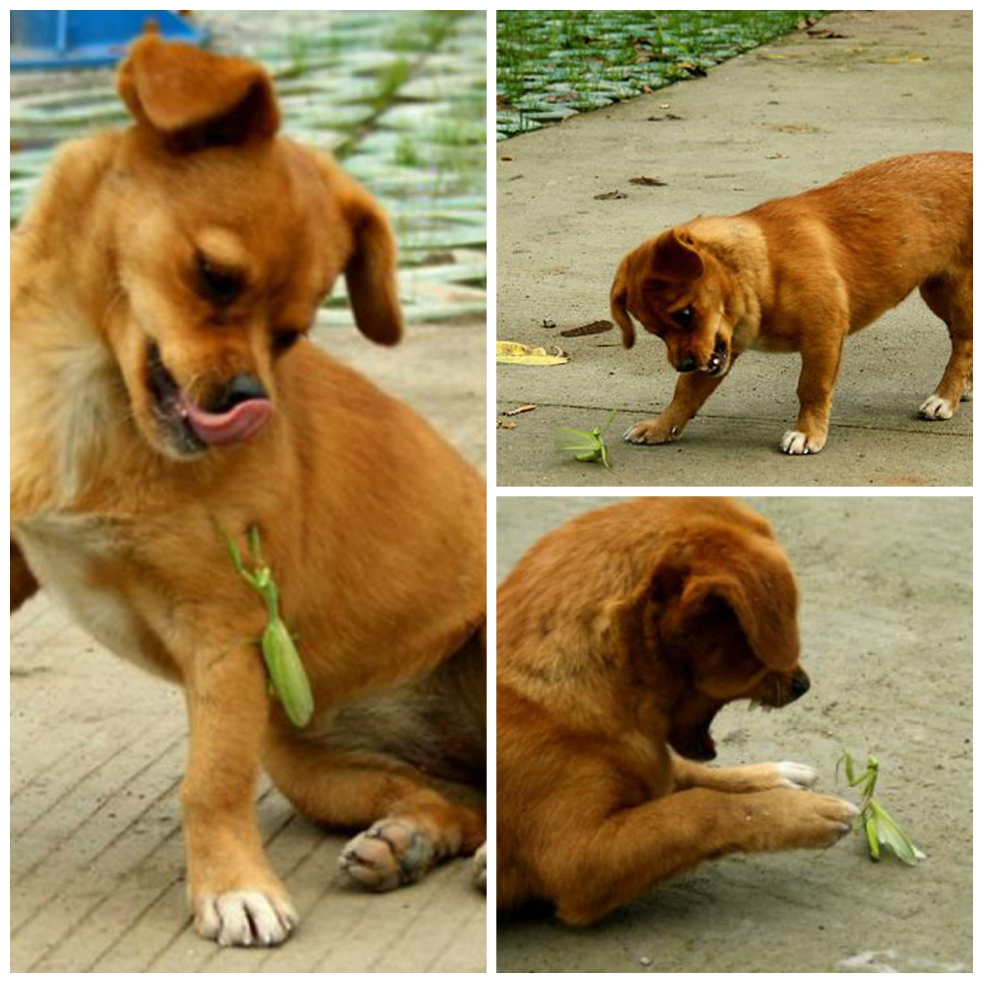 Puppy+With+Preying+Mantis.jpgPuppy+With+Preying+Mantis