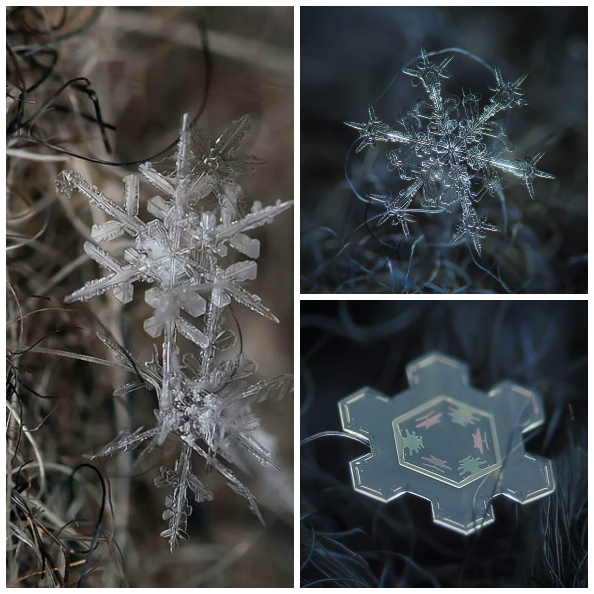 Snowflakes.jpgSnowflakes