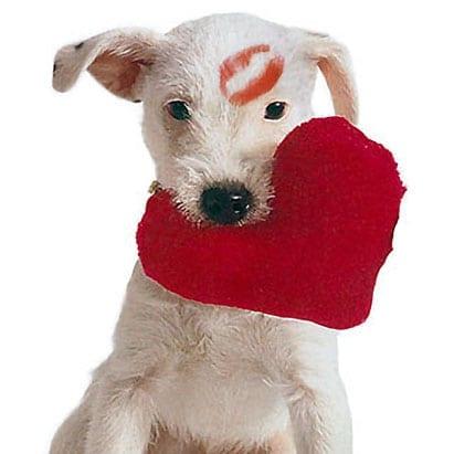 Valentine's+Dog.jpgValentine's+Dog