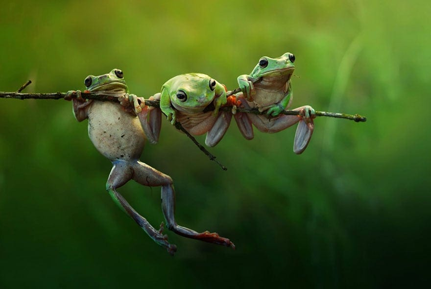Save+The+Frogs.jpgSave+The+Frogs