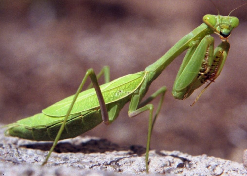 6 Bugs Too Appealing To Kill Rapid Pest Solutions