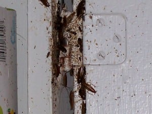Roaches+in+a+Door+Frame.jpgRoaches+in+a+Door+Frame