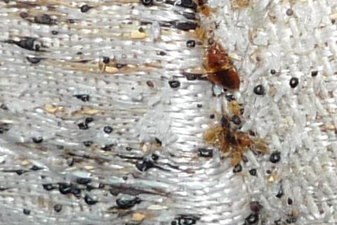 Bed Bug Evidence On A Mattress Jpgbed Bug Evidence On A