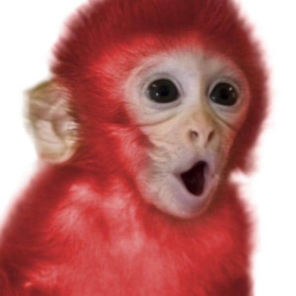 Red+Monkey.jpgRed+Monkey